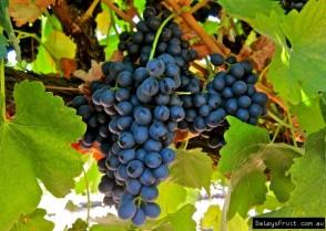 grape-2852