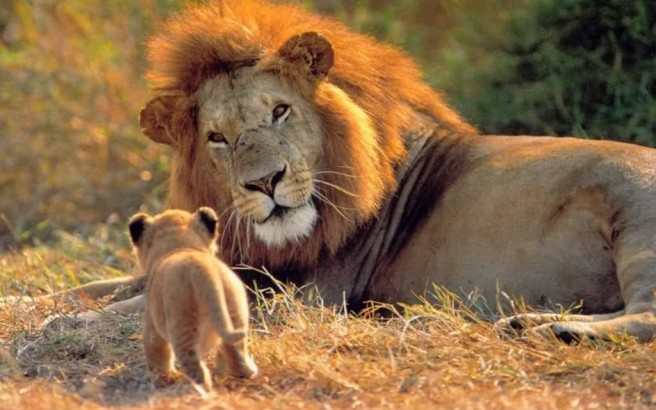 lion-pa-and-son-1024x640