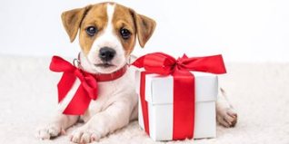 puppy-christmas-present
